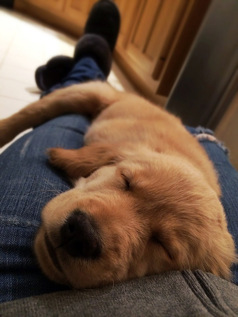 5 reasons you need a dog - dogs help with depression