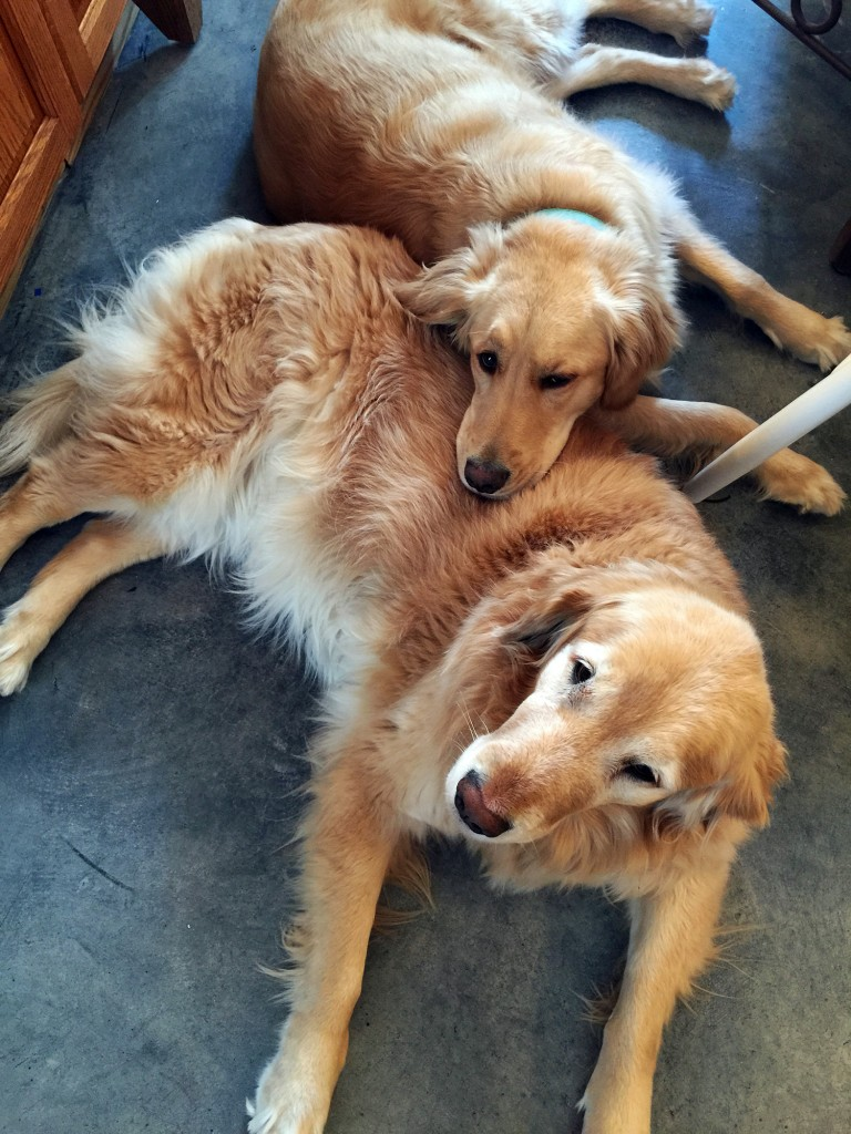 5 reasons you need a dog or two - they keep each other company