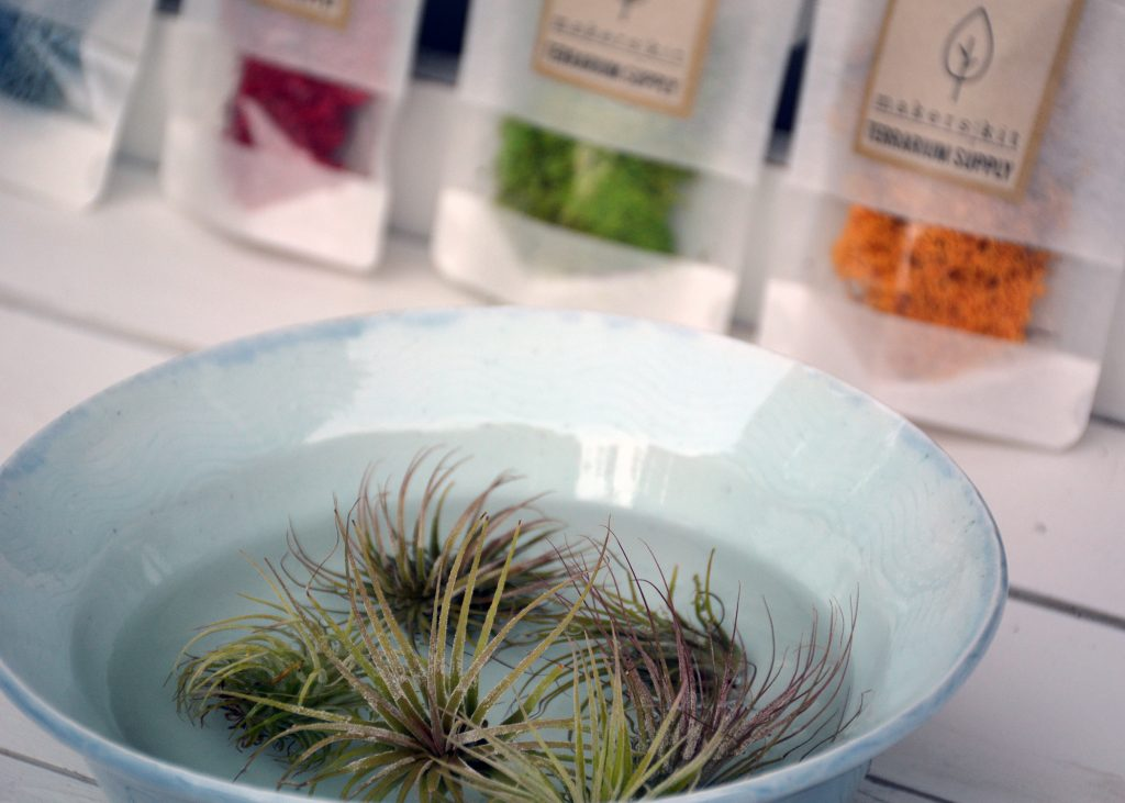 makers kit air plant 1