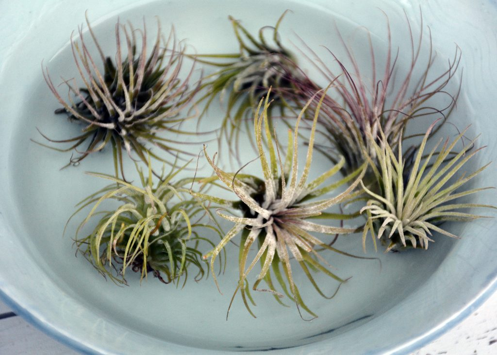 makers kit air plant 2