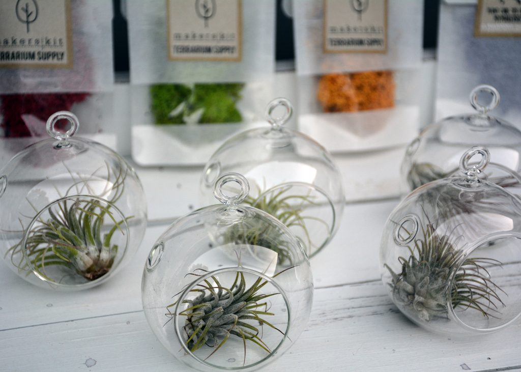 tiny terrariums and colorful moss MakersKit