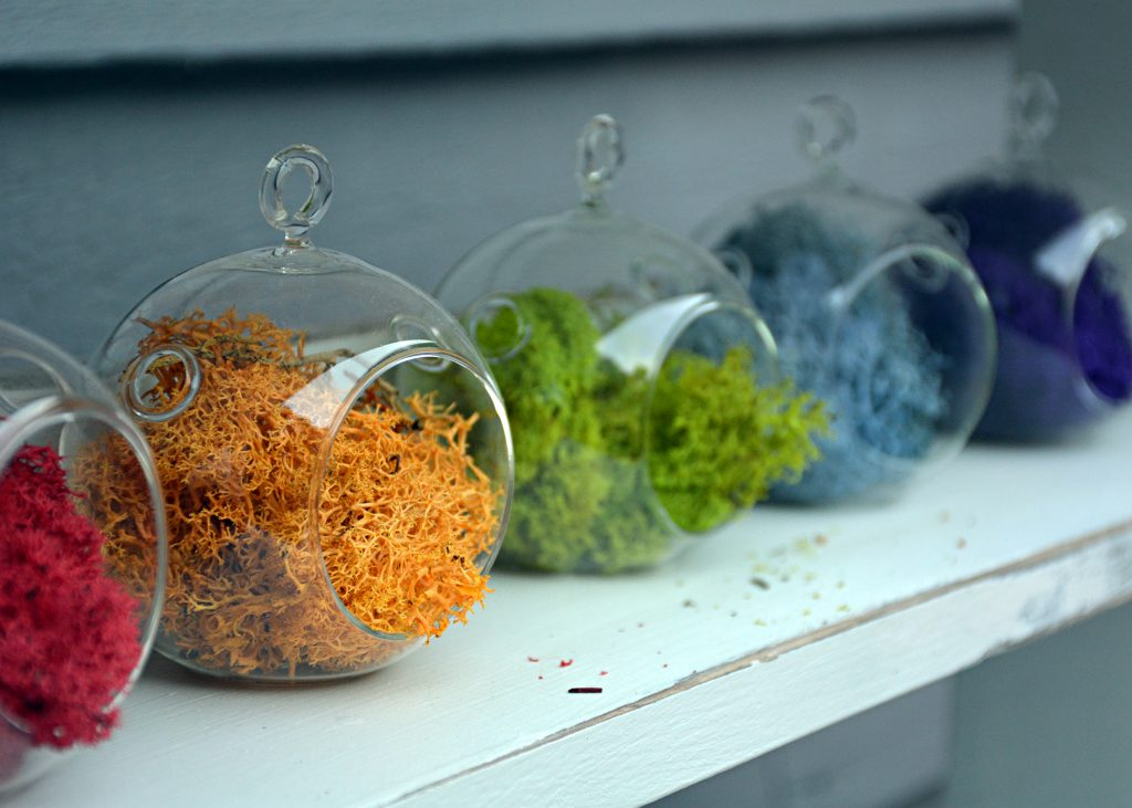 a diy air plant kit from makersKit easy and fun and gorgeous!