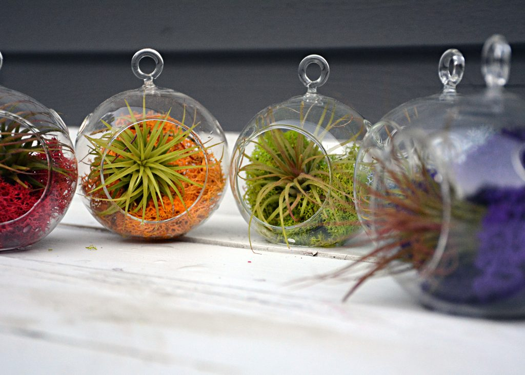 makers kit air plant 7