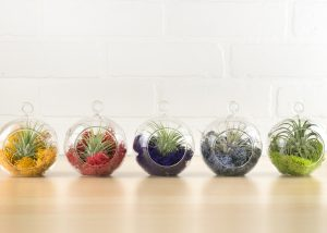 makers kit air plant kit - easy to create, so much fun, and beautiful!